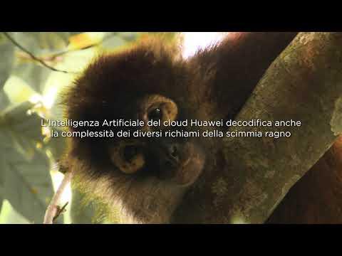 Huawei True Stories - Rainforest
